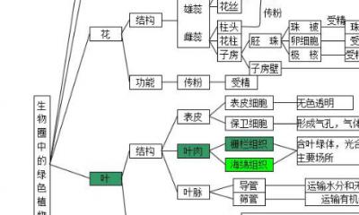 生物圈中的绿色植物思维导图_生物圈中的绿色植物检测题